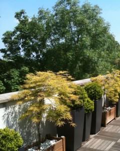 Terrasse à Sèvres - Haute - Erables zen
