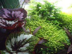 Design végétal vitrine de boutique